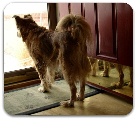 Honey Bear at the door